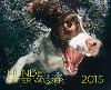 [Seth Casteel: Hunde unter Wasser 2015]