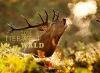 [Tierwelt Wald 2015]